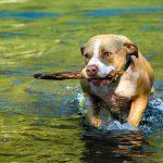 dog fetch stick toy