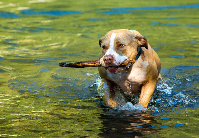dog fetch stick toy