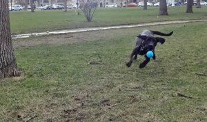 dog tennis ball fetch