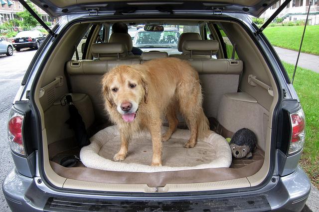 dog trunk