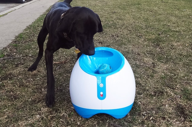 iFetch Too: A Review of the New Tennis Ball Launcher for