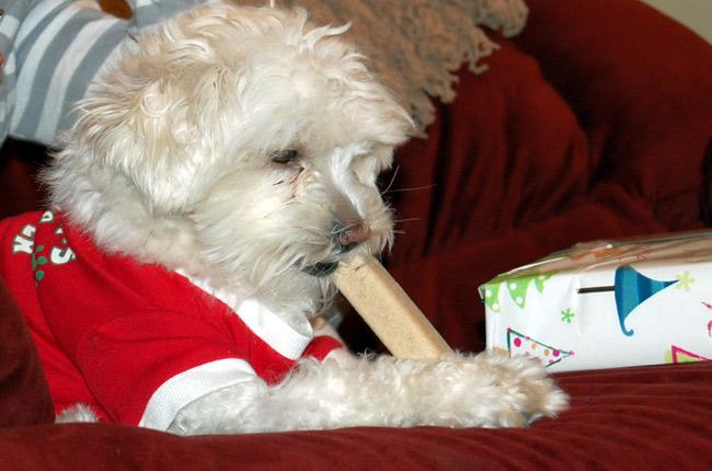 christmas dog stocking gifts