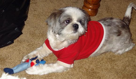 dog fetch toy safety