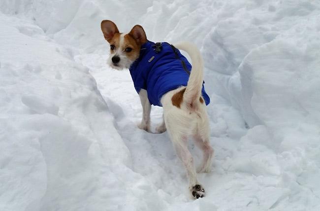 winter dog activities