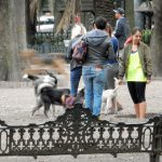 first dog park visit