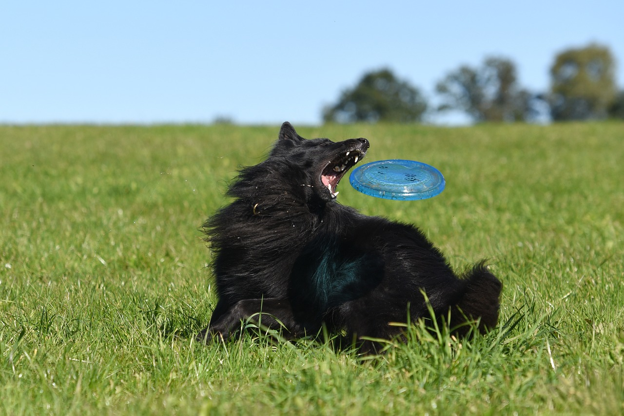 Orijen Dog Food Reviews >> How to Teach Your Dog to Play Frisbee - Doggie Fetch