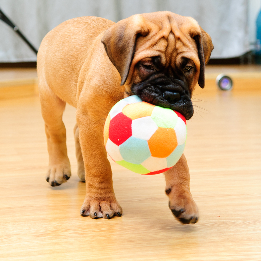 Top 5 best toy balls for dogs for Best dogs for you