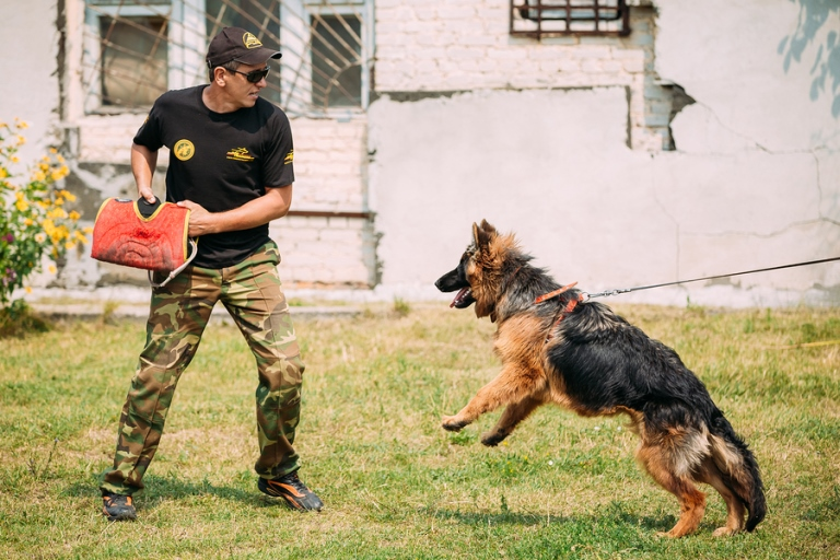 The 10 Most Protective Dog Breeds That You Can Depend On