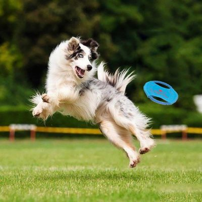 HOTTEST OUTDOOR DOG TOYS