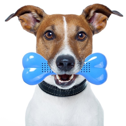 nasus cooling chew toy fun rubber play training toy with bones shape design for pet dogs