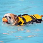 best puppy life jacket featured image
