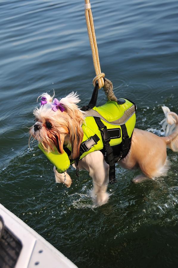 Best Dog Life Jacket For Shih Tzu