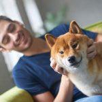 Adopting a Shiba Inu