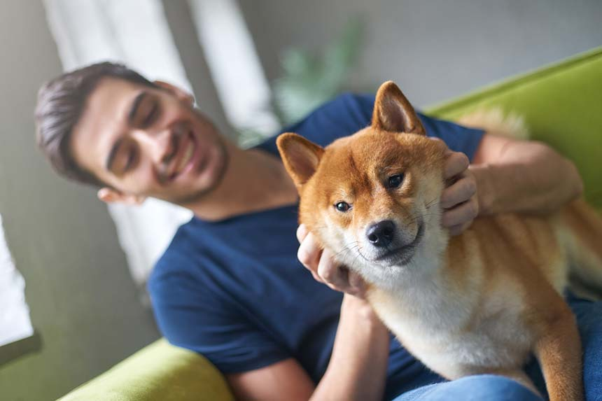 Adopting A Dog In Japan