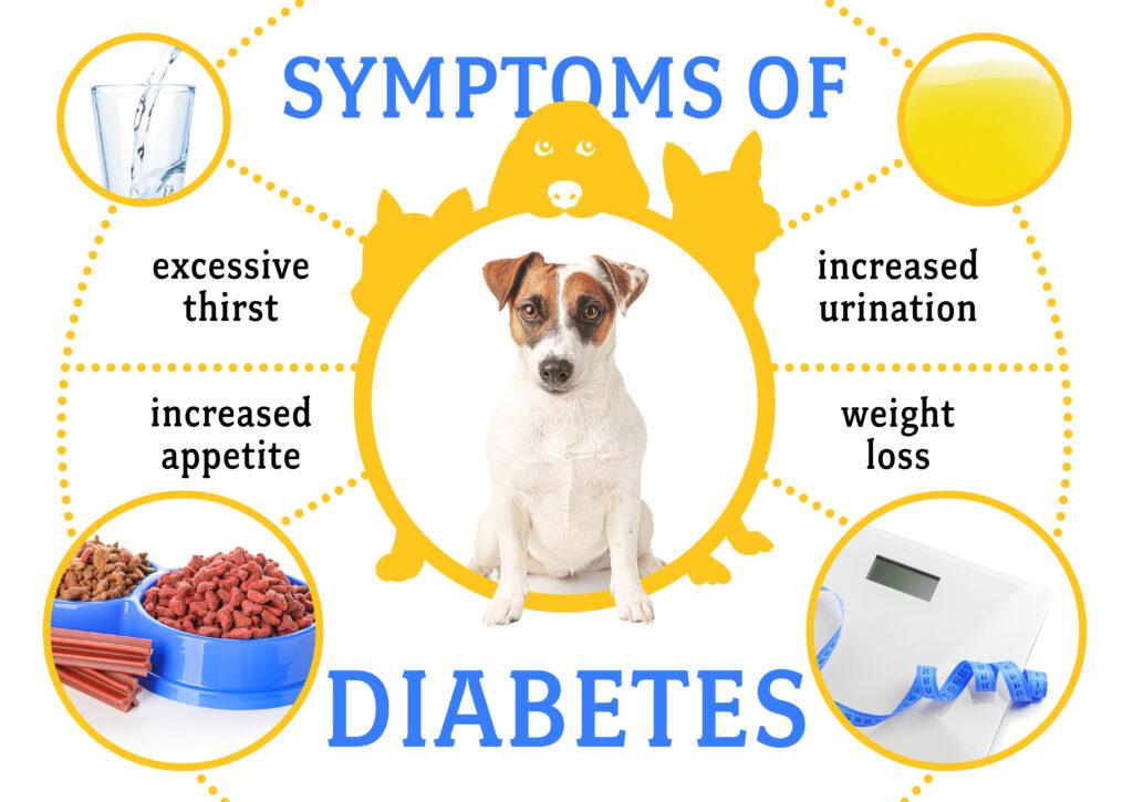 Dog Diabetes Symptoms