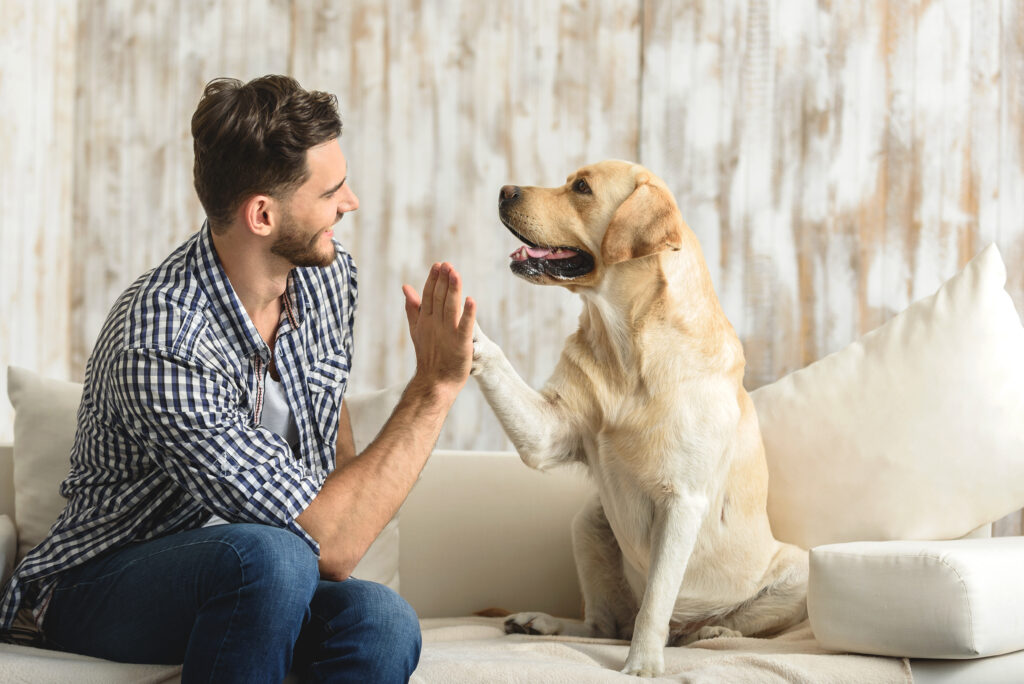 Dog and Owner High Five