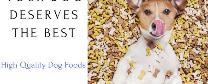 Best Food Dog Food Brands