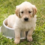 puppy in a dog bowl