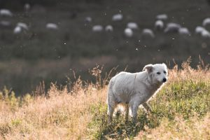 how to tell if your dog has fleas- images