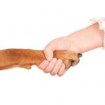 Dog Trusting