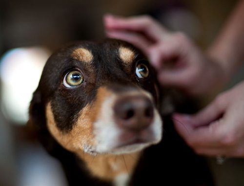 Lyme Disease in Dogs: Symptoms and Prevention Tips