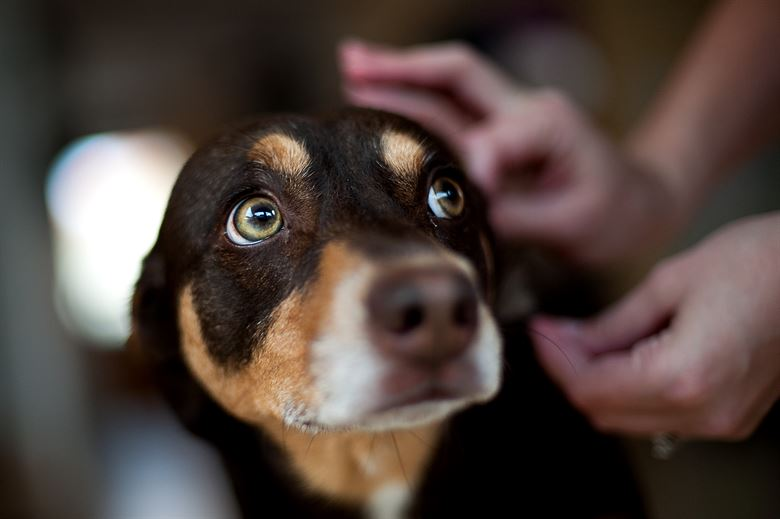 The 5 Best Dog Breeds For Apartment Living Doggiefetch
