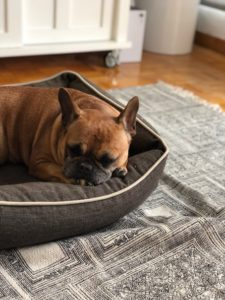 indestructible dog bed