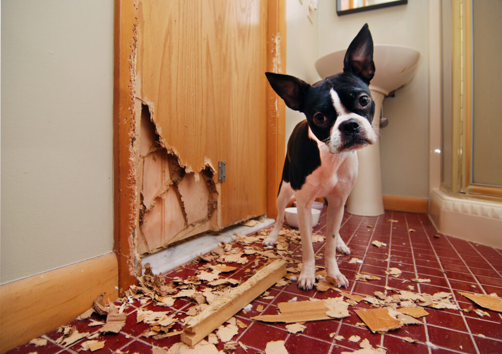 Dog Destroy Door