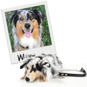Polaroid Purse Dog 2 Comparison