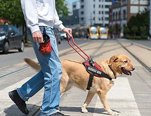 The 13 Best Service Dog Vests and Harnesses (2019)