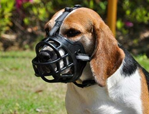 13 Best Dog Muzzles Review in 2019