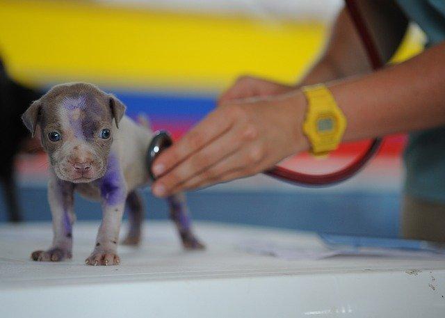 Puppy Vet