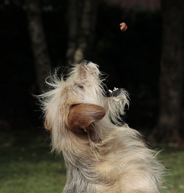 Dog Catching Food