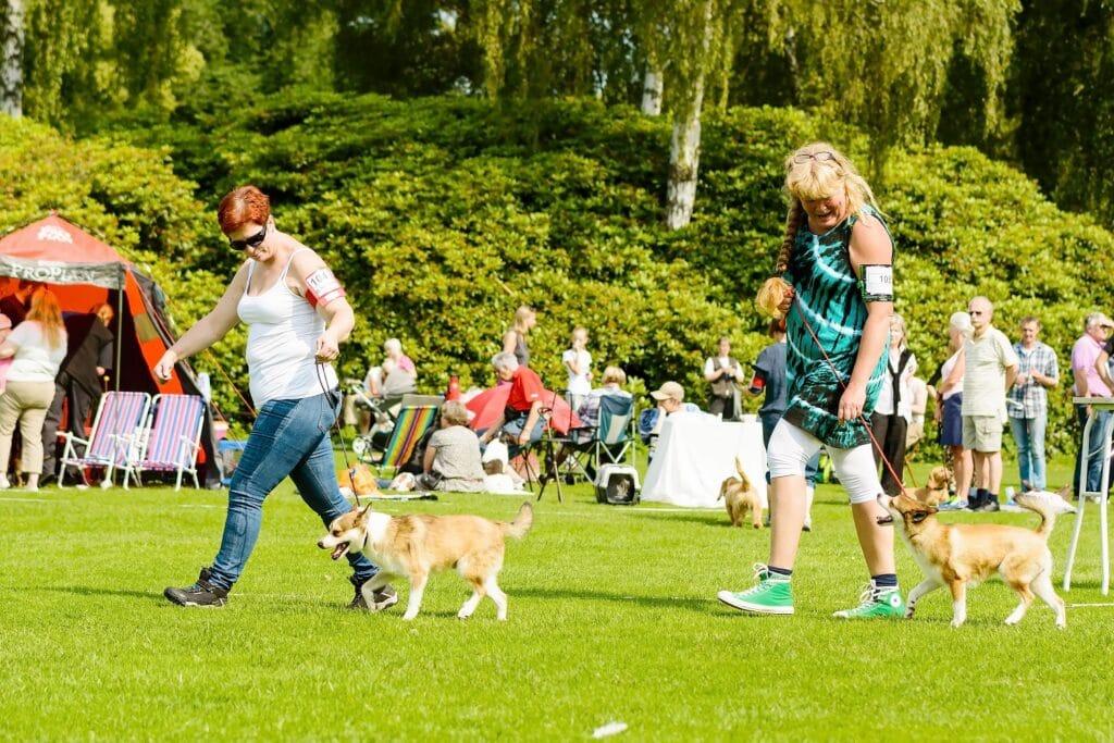 Norwegian Lundehund Dog Show