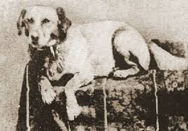 Abraham Lincolns Cur Dog