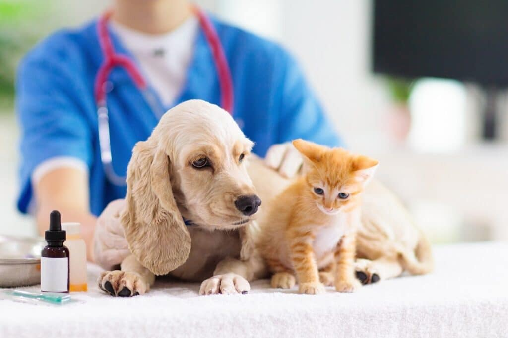 Dog and Cat getting vaccine