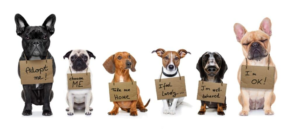 Dogs Want to Be Taken Home