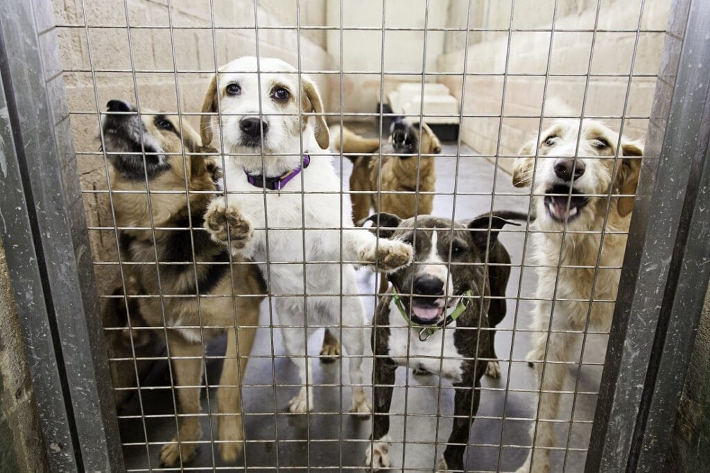 Dogs at Pound