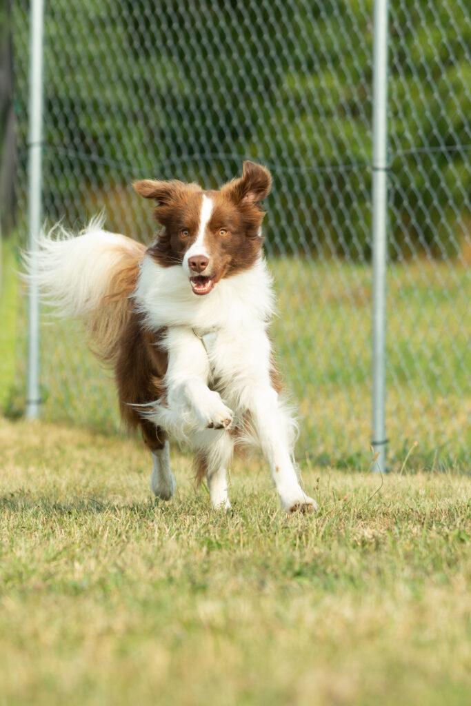 Dog in a dog run with grass
