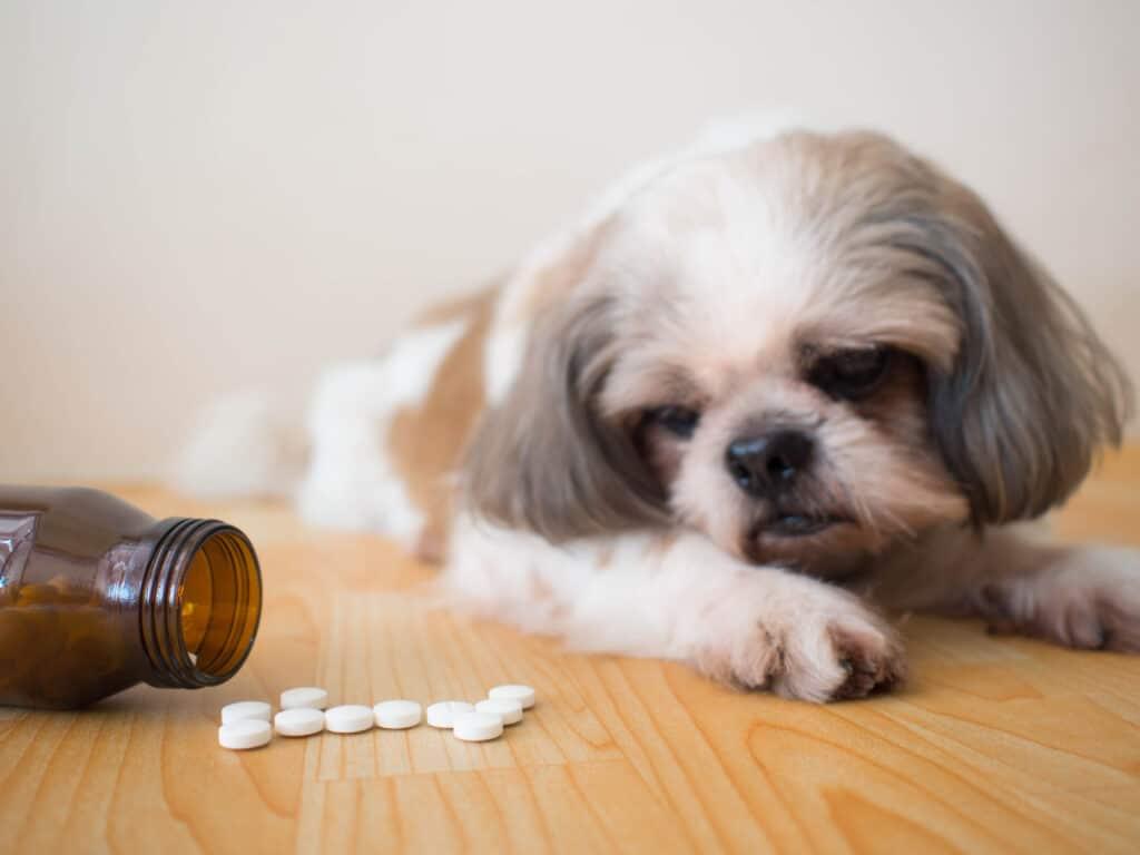 Dog Looking at Medicine